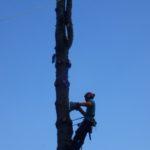 Préparation de l'entaille préalable au démontage de la première partie du tronc