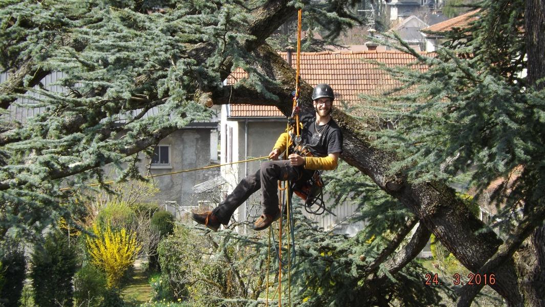 elagage arbre rhone