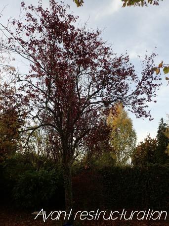 Elagage d 39 anton arbre for Prix de l elagage d un arbre